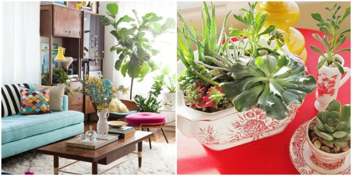 1483739336-houseplants