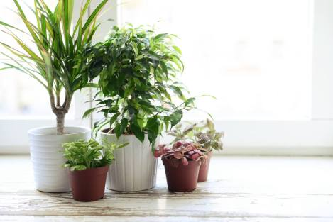 winter-potted-plant-care